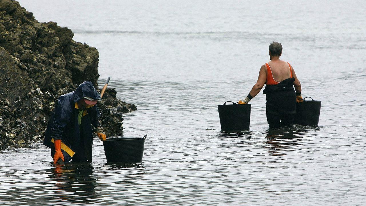 .Mariscadoras recogiendo ostra japonesa en la ría de O Barqueiro