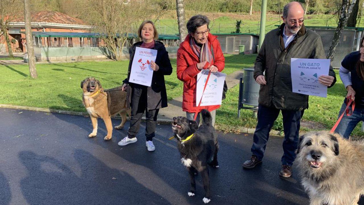 Campaña municipal contra el regalo de animales en Navidad