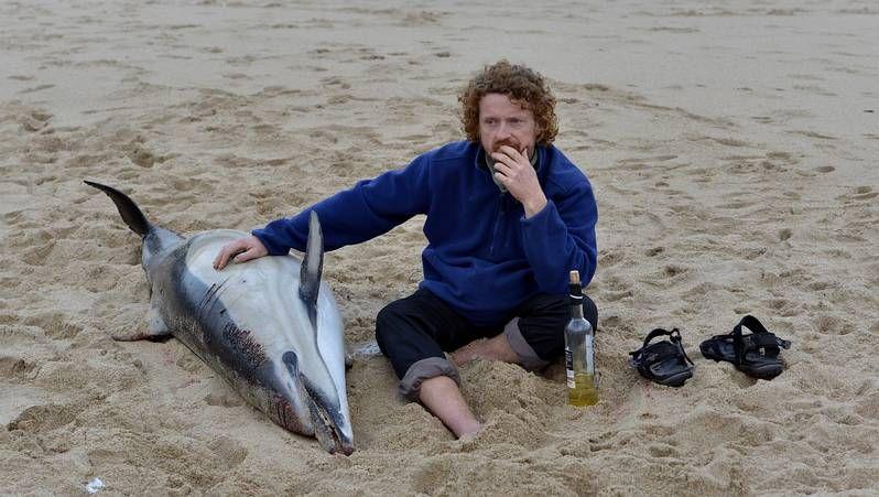 Cachalote gigante en el Museo del Mar de Vigo.Los delfines llegaron muertos el sábado y el domingo.