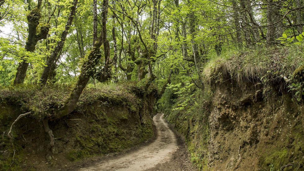 .Otro tramo del Camiño da Estrada