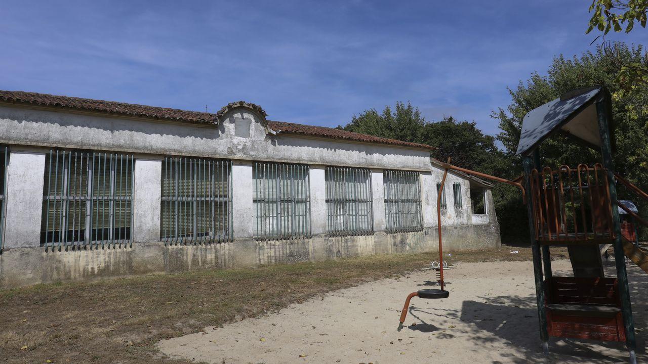 Los jabalíes se comen hectáreas de maizales en Santiago