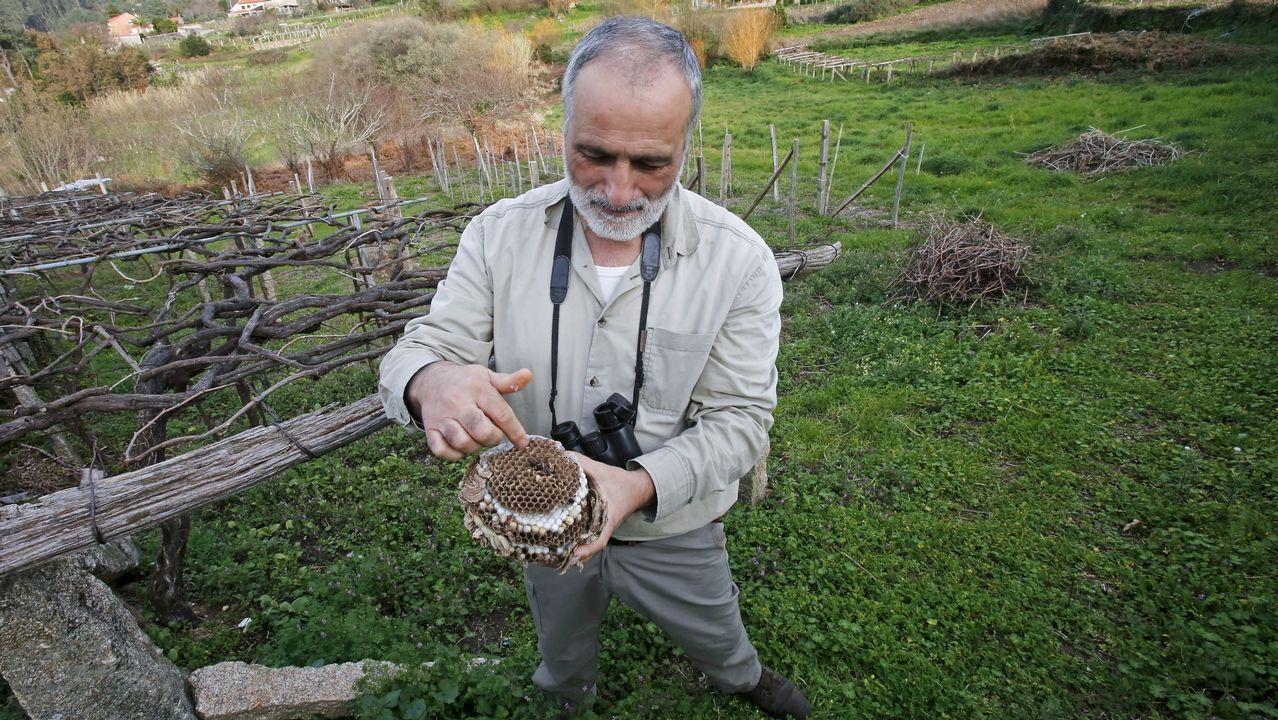 Las cigüeñas y los cormoranes toman posesión de la comarca.Colectivos asturianos limpiando la basura en las zonas aledañas a un río