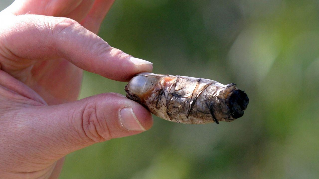 Parece un dedo, o un puro, pero es un artefacto encontrado en Ribeira hace 12 años