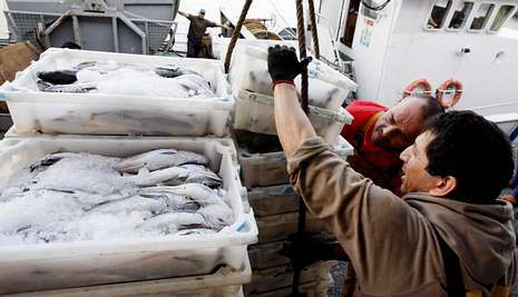asdf.La nueva ley plantea sanciones por no desembarcar todo lo que se pesque.