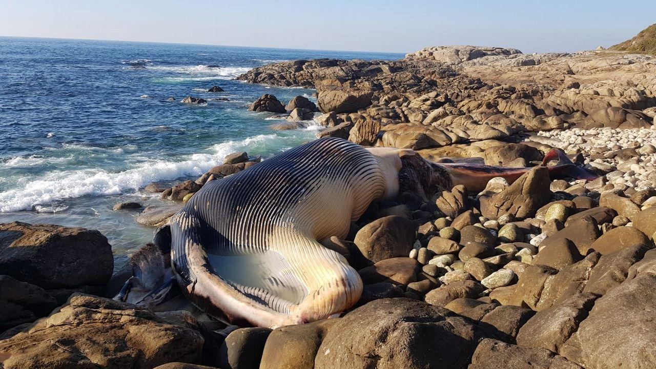Ballenas.En 21 de diciembre de 2018, una ballena común de 20 metros de longitud apareció varada ayer en la costa de Oia