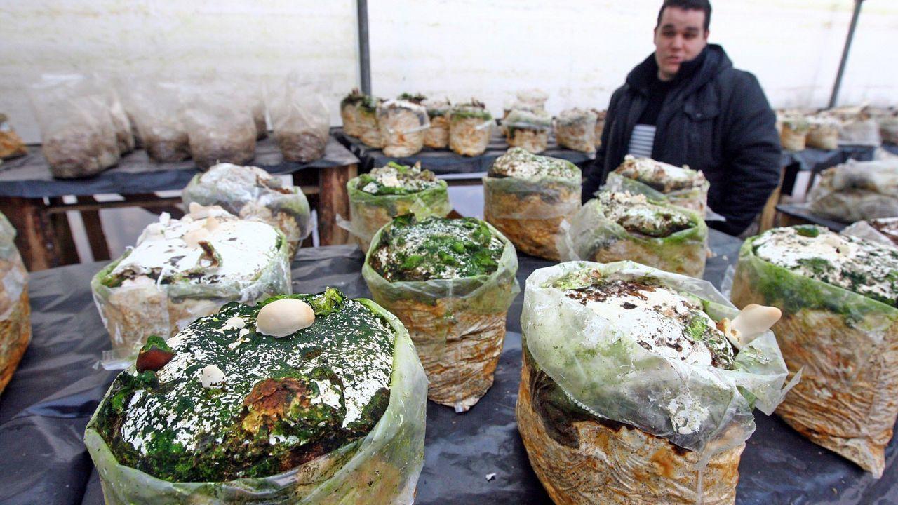 Alijo en el puerto de Algeciras en el 2015 de cocaína oculta en piñas frescas procedentes de Centroamérica.Instalacións dunha empresa galega de biotecnoloxía aplicada ao cultivo sostible de cogomelos