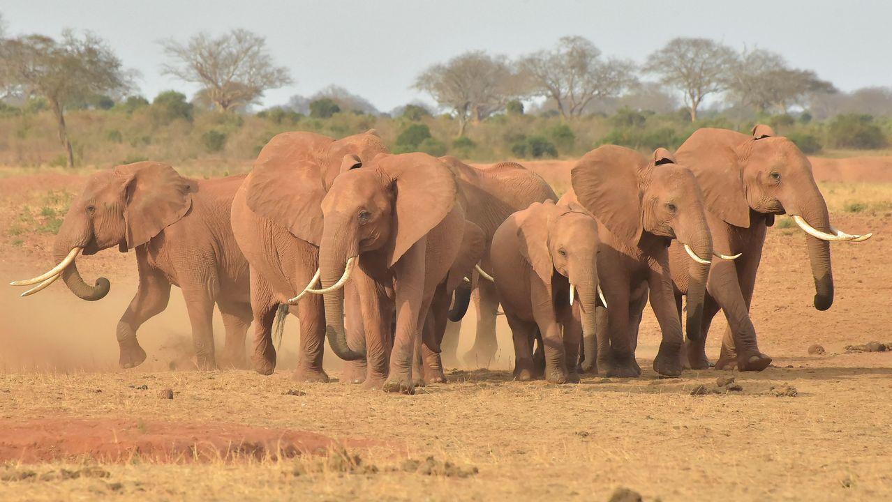 Varios elefantes en un parque de Kenia.