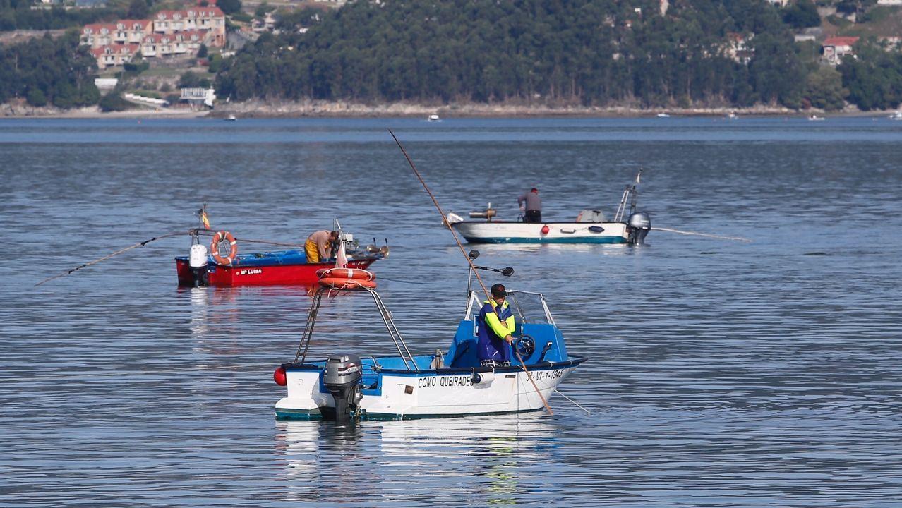 La arribada del atún índico a Marín