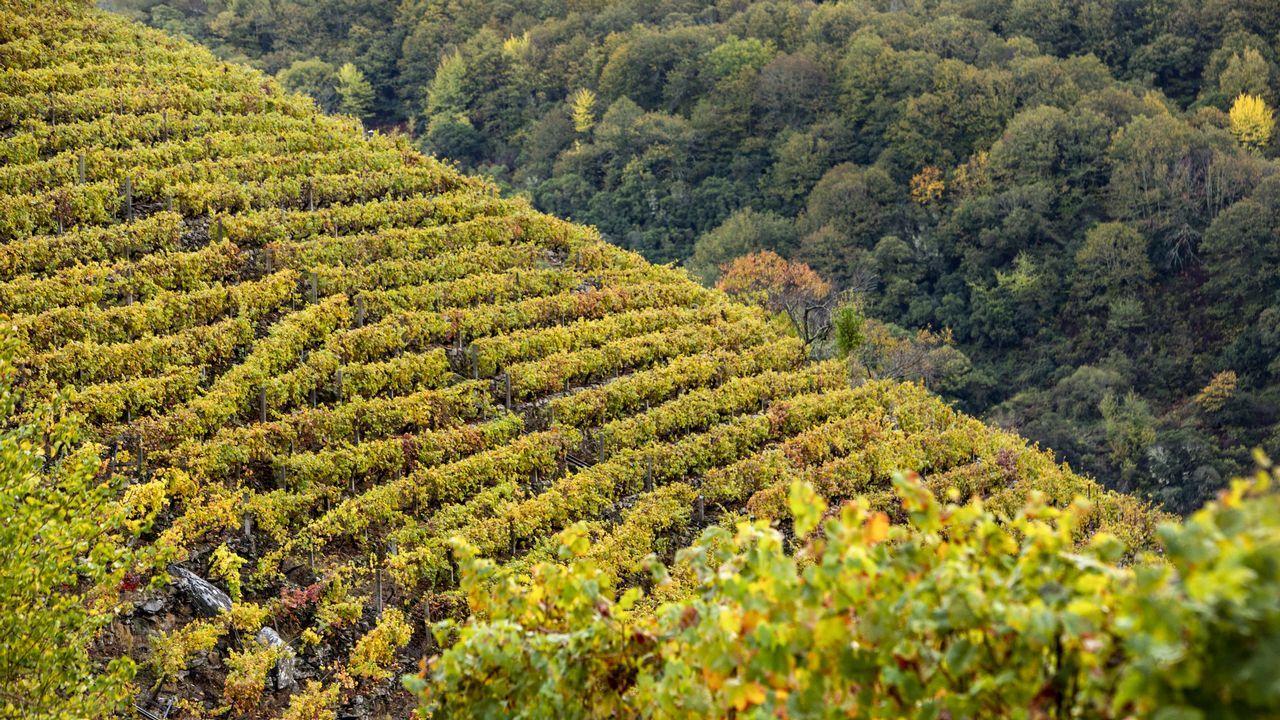 En la ribeira de Doade están algunas de las viñas con mayor pendiente