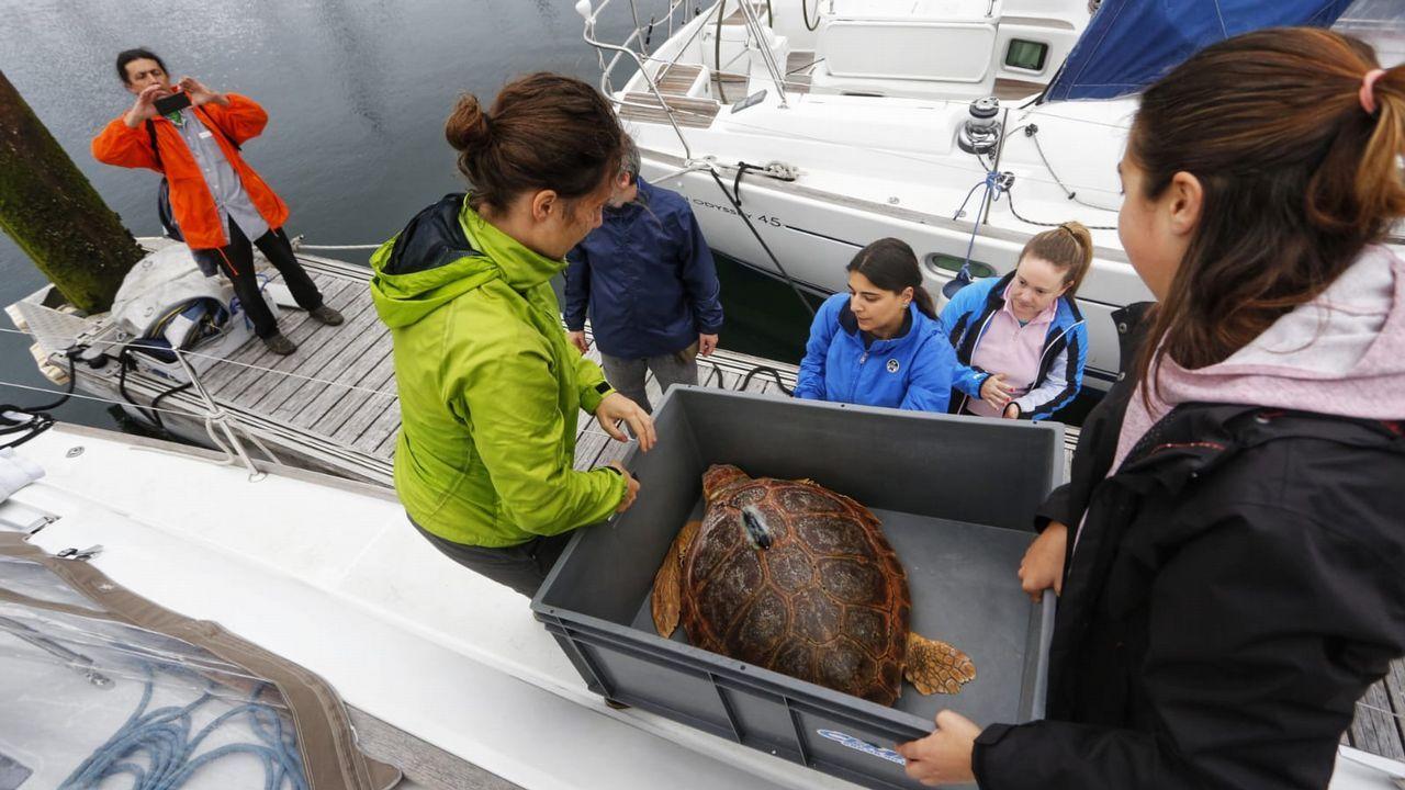 Cemma libera una tortuga en Teis.Un grupo de pasajeros consulta los vuelos en el Aeropuerto de Asturias