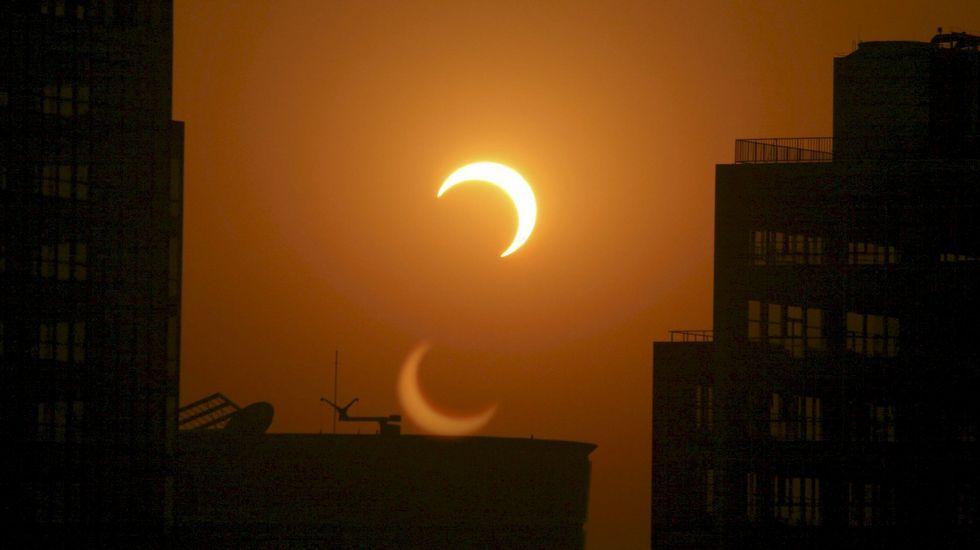 El eclipse anular de sol, en streaming.Phyllanthus engleri