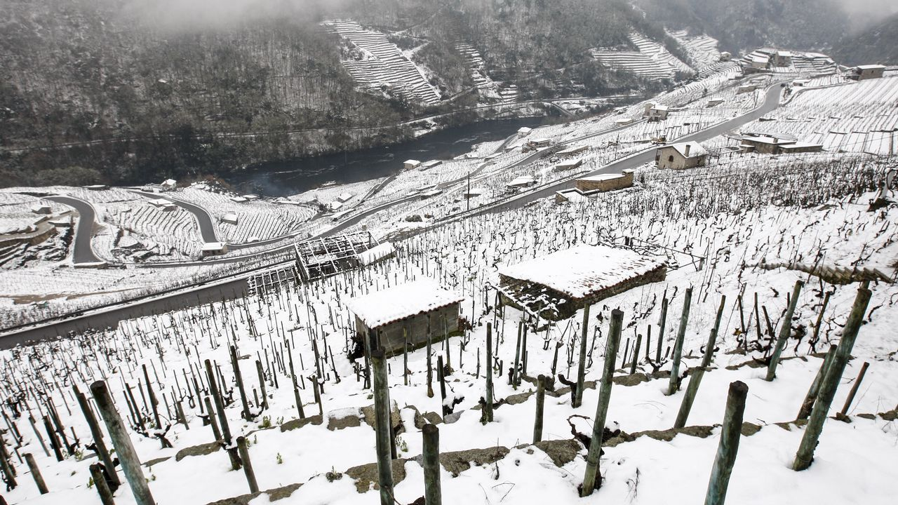 .La nieve que deja el temporal cubre los bancales de las viñas de la Ribeira de San Fiz.