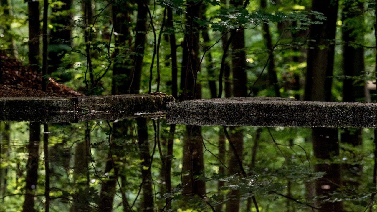 Vista de árboles reflejados en un estanque, en el bosque Heide de Dresde (Alemania)