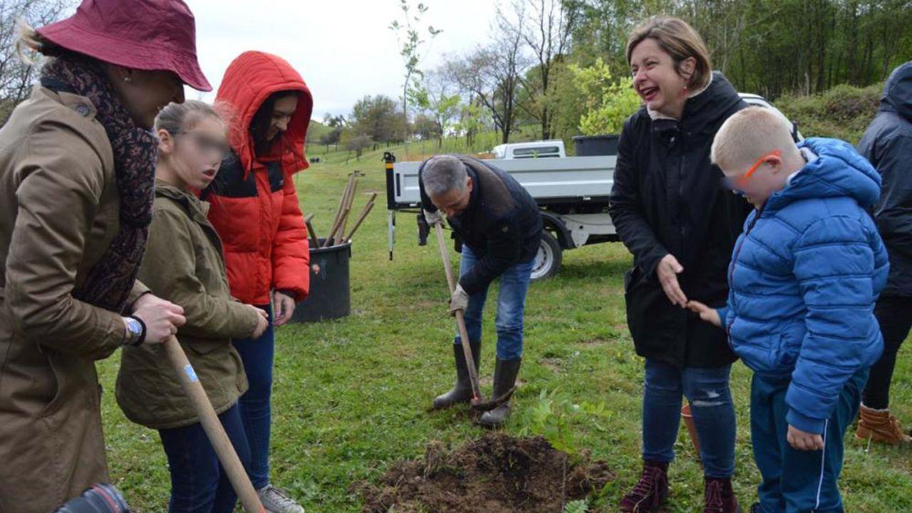 Escolares ovetenses plantarán un centenar de árboles en el Naranco