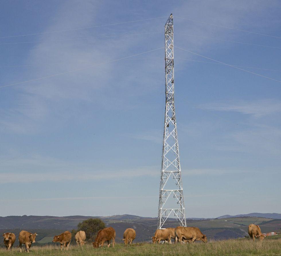 .El ganado seguirá pastando al lado de las torres.
