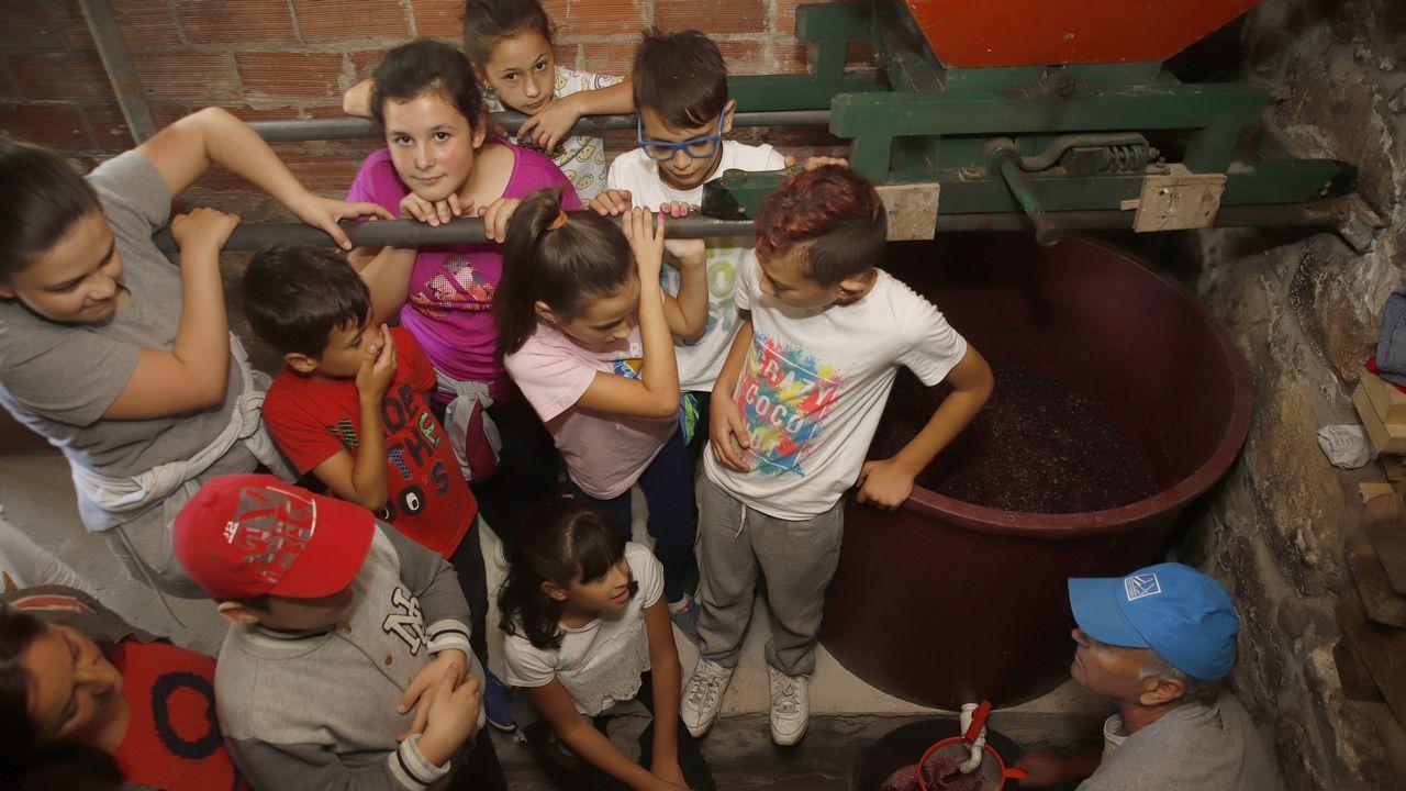 Los alumnos del colegio Campanario aprendieron a vendimiar