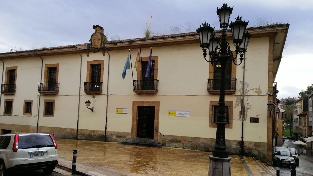 Plumero de la pampa en un edificio del Ministerio de Energía y Turismo en Oviedo