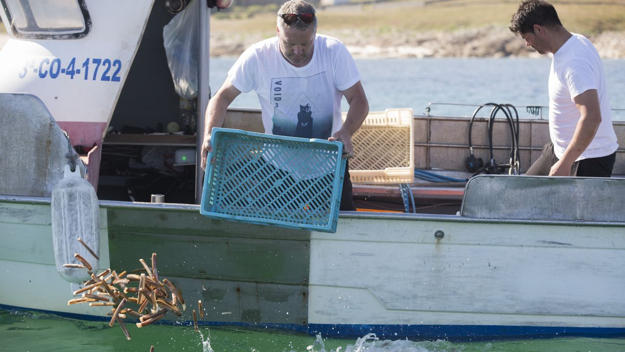 .A bordo de cuatro lanchas, los mariscadores devolvieron al mar unos 450 kilos de navaja