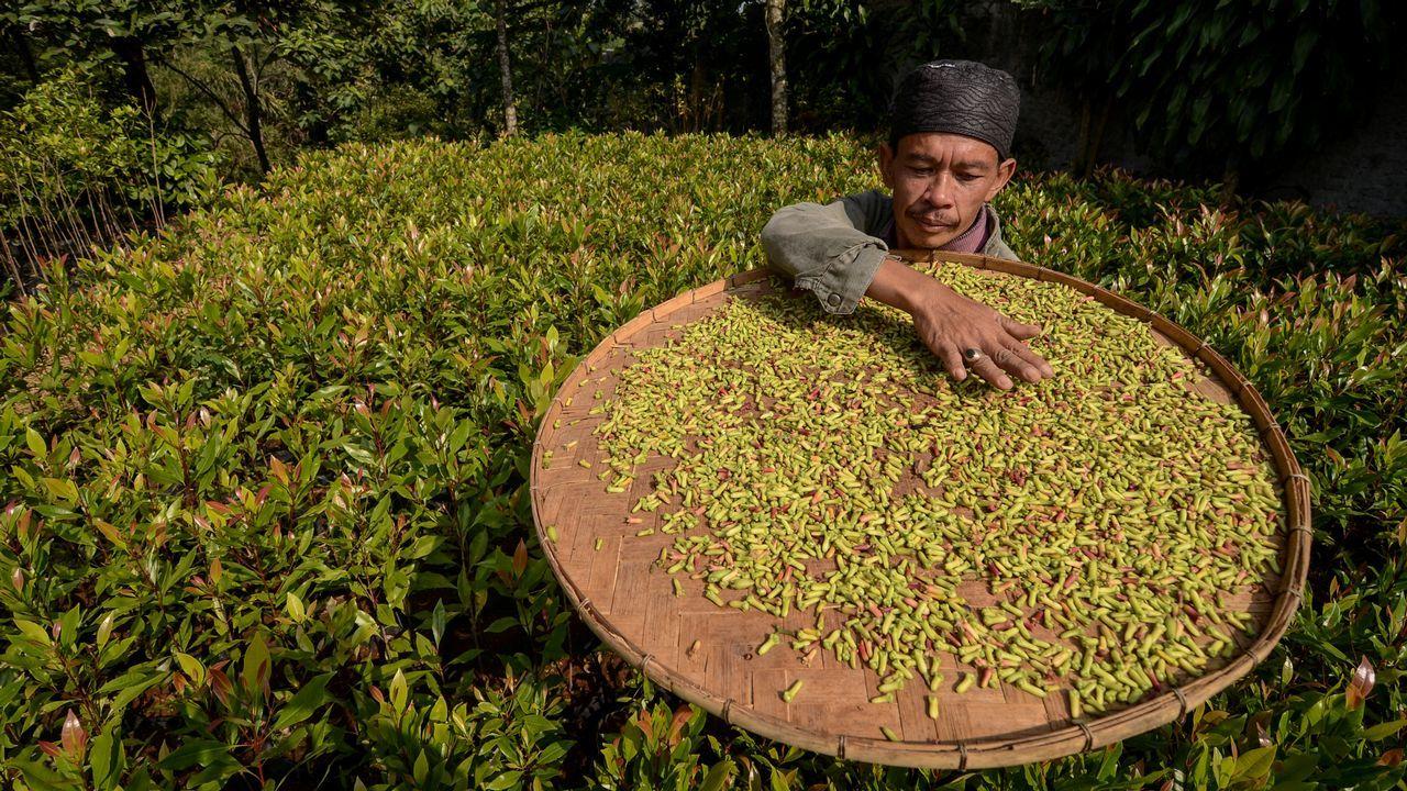 Un trabajador extiende su cosecha para secar en una aldea de Rancamaya, en Indonesia