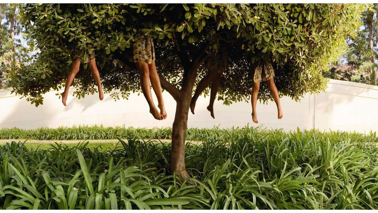 «Árbol», una imagen representativa de la obra fotográfica de la artista holandesa Ellen Kooi