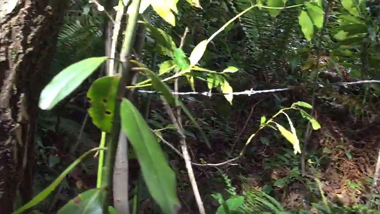 Un alambre de espinos cruzando el camino a la altura del cuello de los ciclistas.El bot automático le otorga -por el momento- la victoria a España