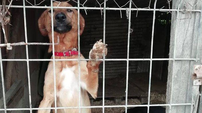 Perros que aún esperan hogar en la perrera ilegal de La Luz