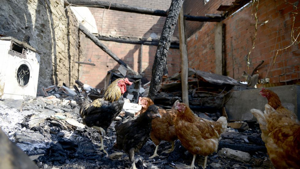 Así ha quedado lazona afectada por el incendio de Trives.
