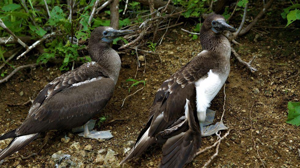 Isla de la Plata, la Galápagos de los pobres