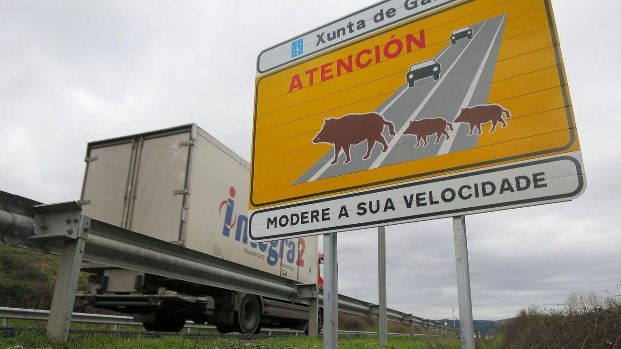Imagen de un cartel alertando del peligro de jabalíes en la carretera LU-533, entre Lugo y Monforte