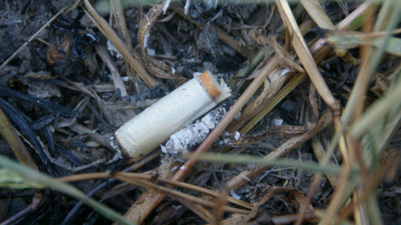 Colilla con un esparadrapo y un lastre para afectar al lugar exacto donde se deposita