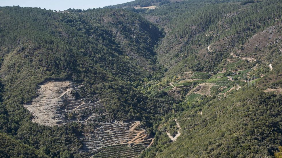 Las ayudas son para plantación de viñedo