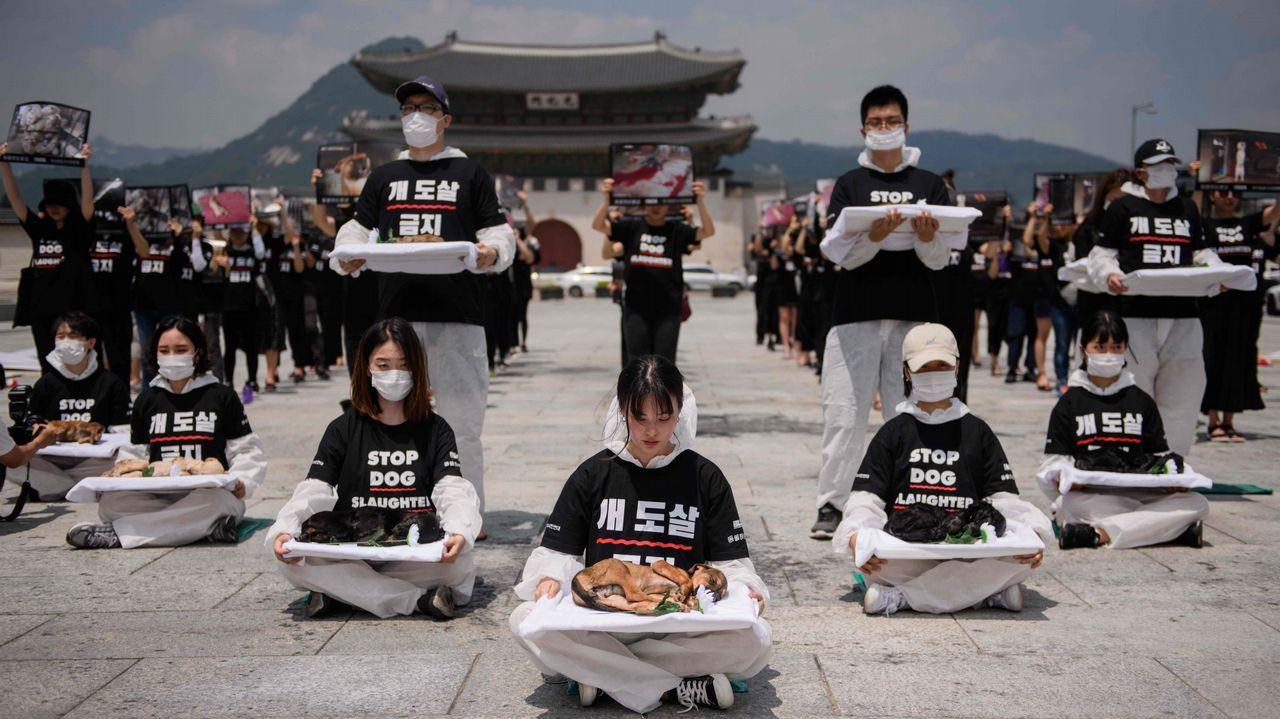 Activistas a favor de los derechos de los animales protestan en Seúl