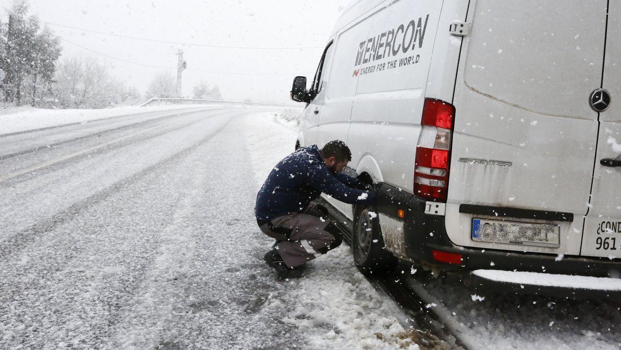 Temporal de nieve en A Mariña.Ganado en montes lucenses, en febrero del 2001