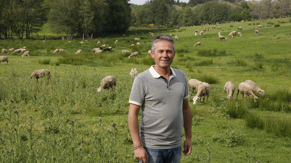 Proponen que Lugo limpie sus zonas verdes con ovejas y cabras.