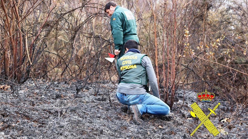 Agentes del Seprona investigan un incendio.Agentes del Seprona investigan un incendio