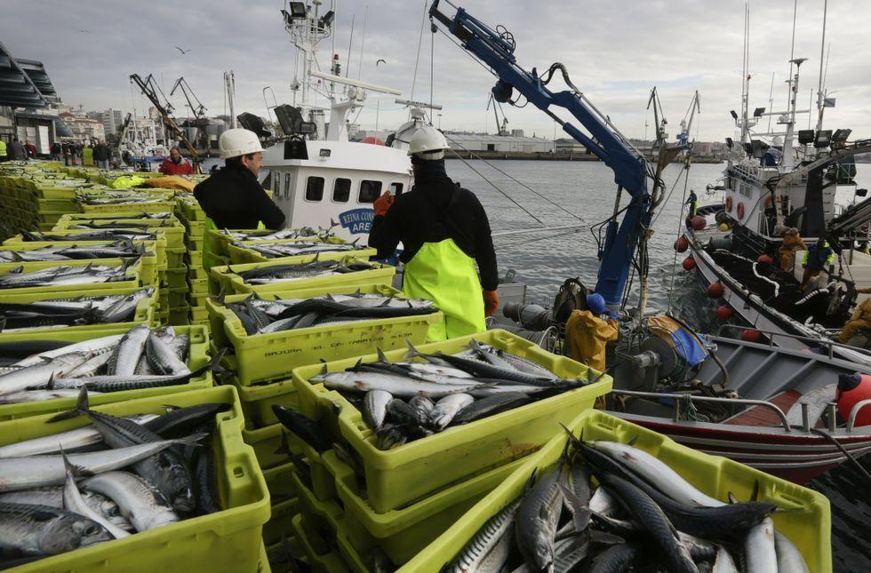 Autobus escolar.El cerco reclama más cuota de xarda (en la foto una descarga en A Coruña), jurel y sardina.