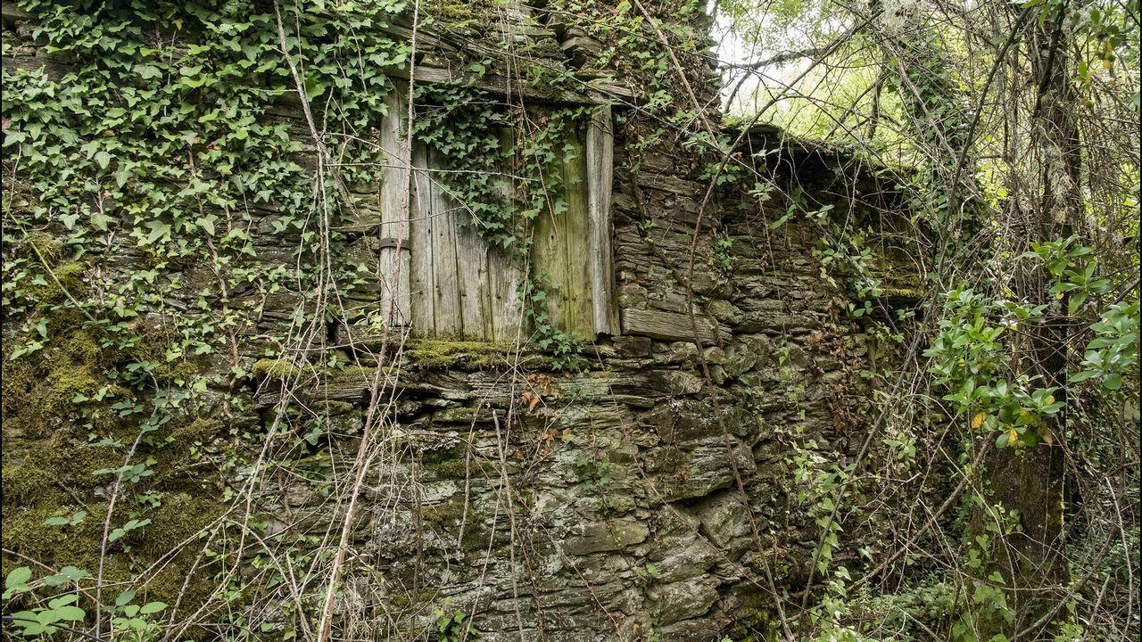 .Uno de los antiguos sequeiros de castañas que se encuentran en las cercanías de iglesia arruinada
