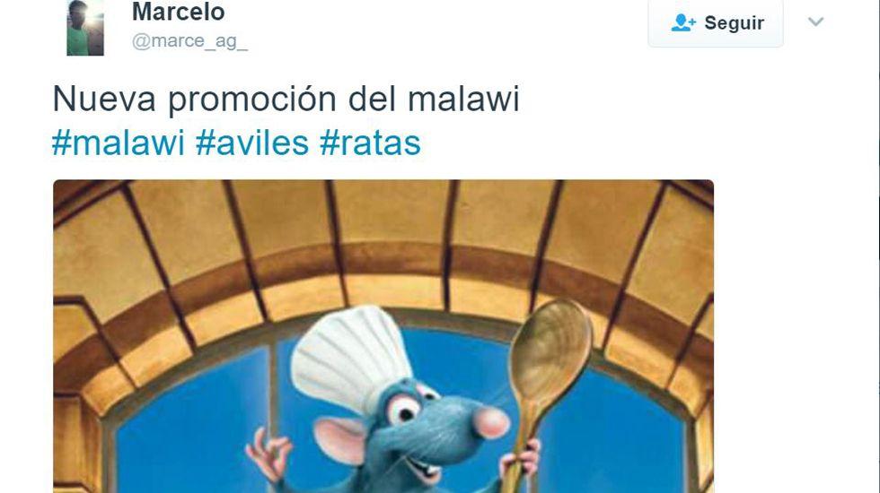 Una rata merienda una empanada en una cafetería de Avilés.Eduardo Méndez Riestra