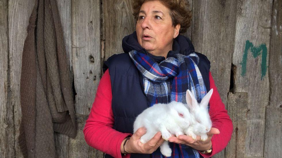 Nace en Xinzo un conejo sin orejas.