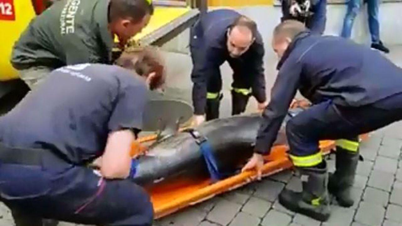 Aparece muerto el delfín de Llanes.Una curruca entre los humedales de Cospeito
