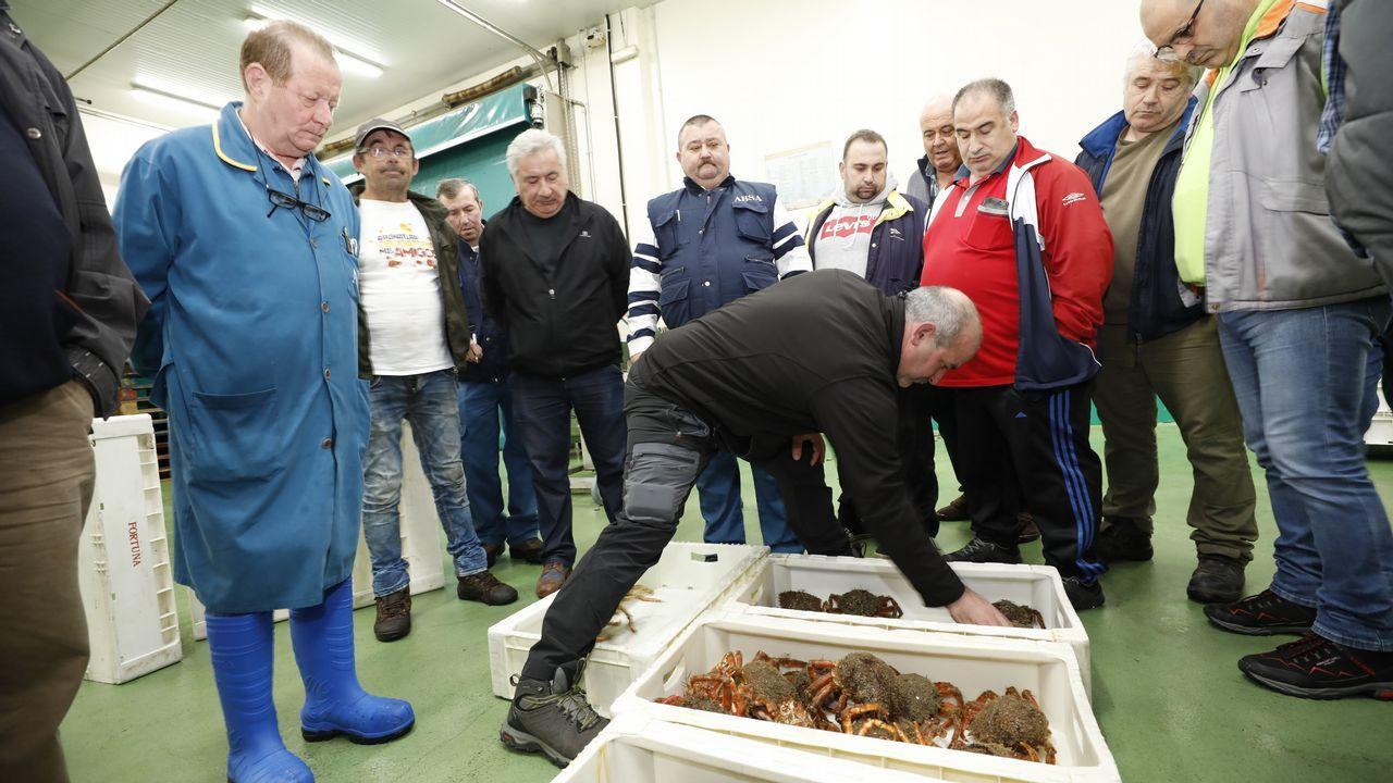 Burela subasta las primeras centollas de A Mariña