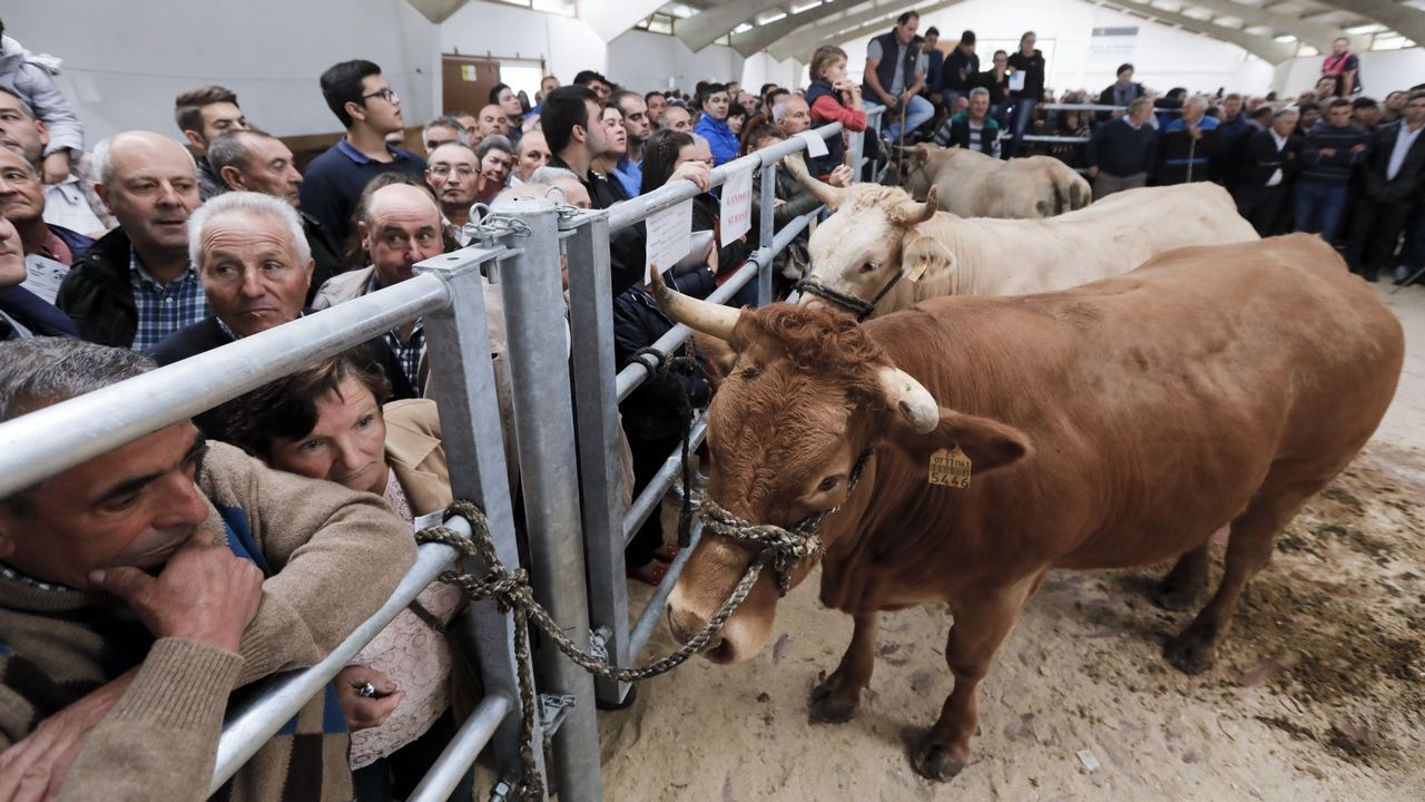 El viaje en tren del ministro de Fomento de Sarria a Lugo.La carnicería Brais, en Lugo, vende hamburguesa de vaca de raza cachena.