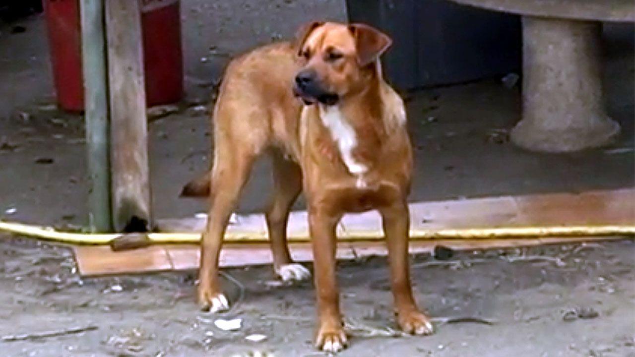 Uno de los perros de la finca de Arniella donde se produjo el ataque