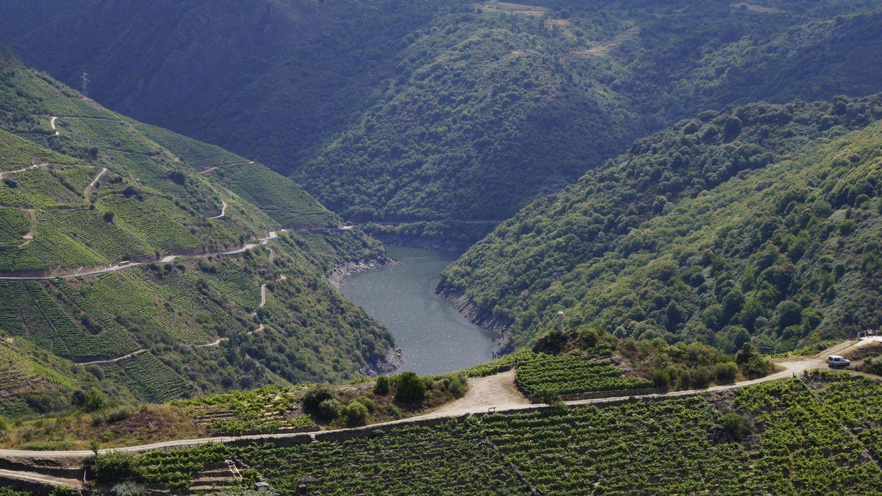 La primavera colorea Galicia.El águila culebrera es una de las rapaces que frecuentan el cañón del Sil