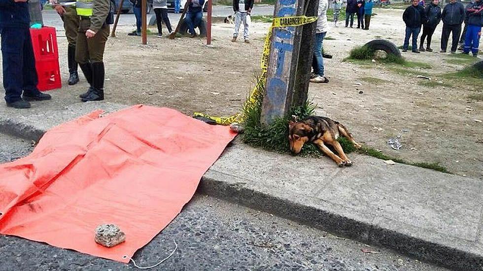 Los ataques de un perro rabioso en China