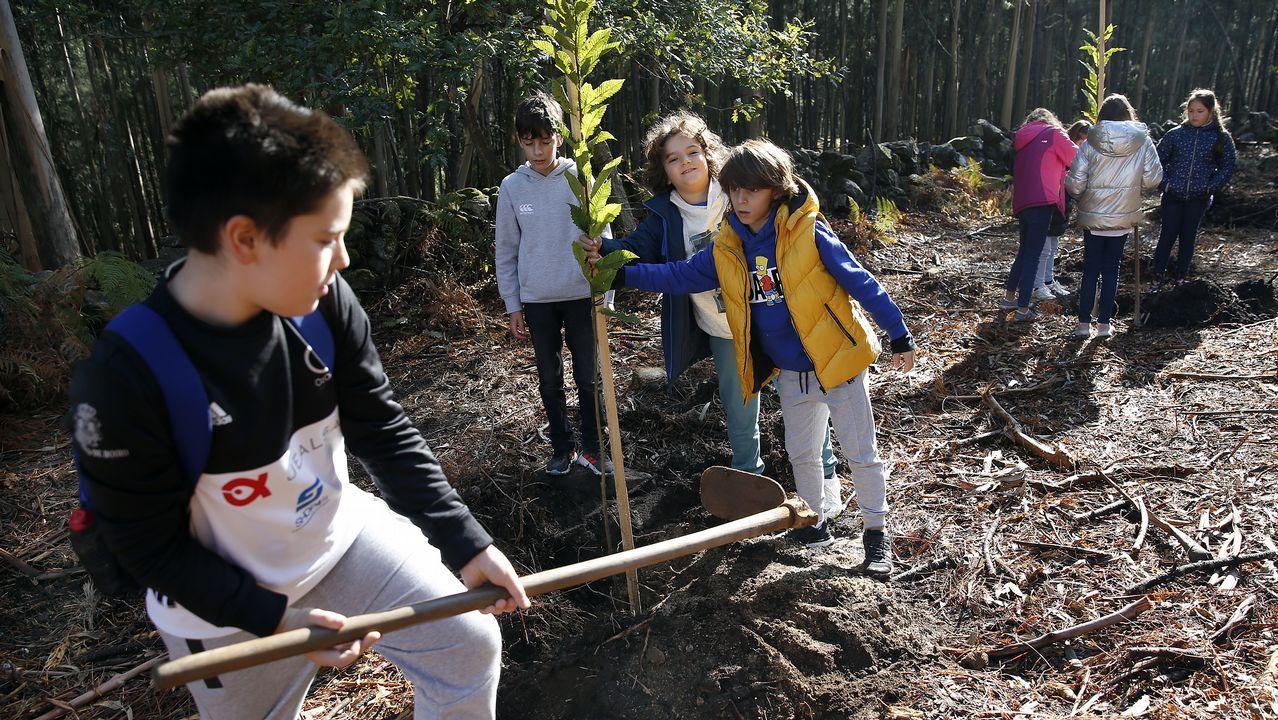 ¡Los alumnos del colegio Santa Baia hacen una plantación de castaños en Boiro! ¡Búscate en nuestro álbum!