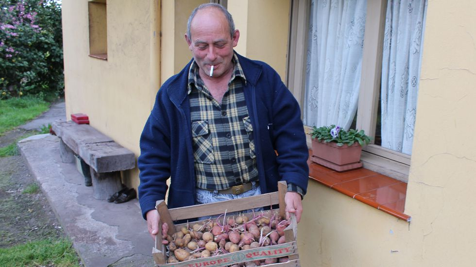 El gijonés Tino Llano, de Monteana, muestra las patatas afectadas por la polilla guatemalteca.José Loché muestra una caja de patatas cultivadas en Montiana