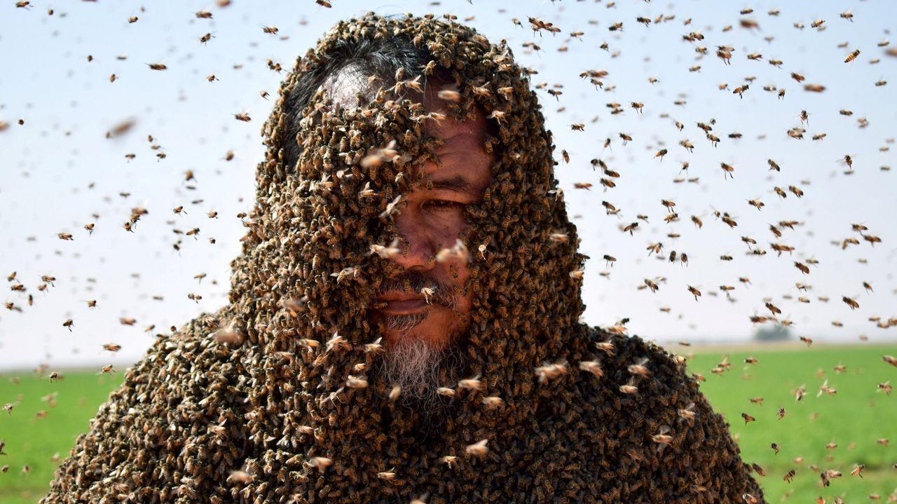 Un hombre posa con el cuerpo cubierto de abejas en Tabuk (Arabia Saudí)