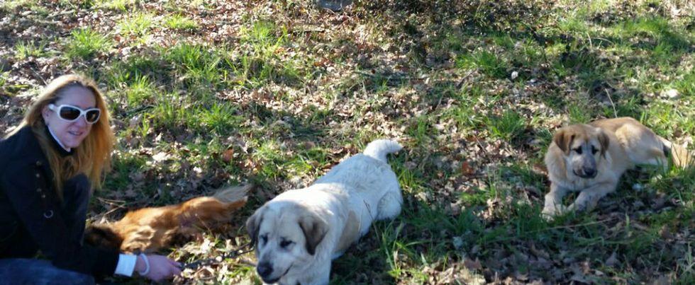 Los perros abandonados con una de las personas que los recogió el pasado viernes.