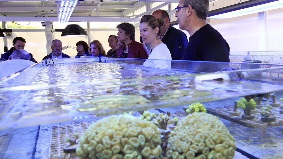 Una granja de corales en Viveiro.Discursos de apertura, ponencias y opiniones del público coincidieron ayer en Burela al reivindicar el peso de la pesca.